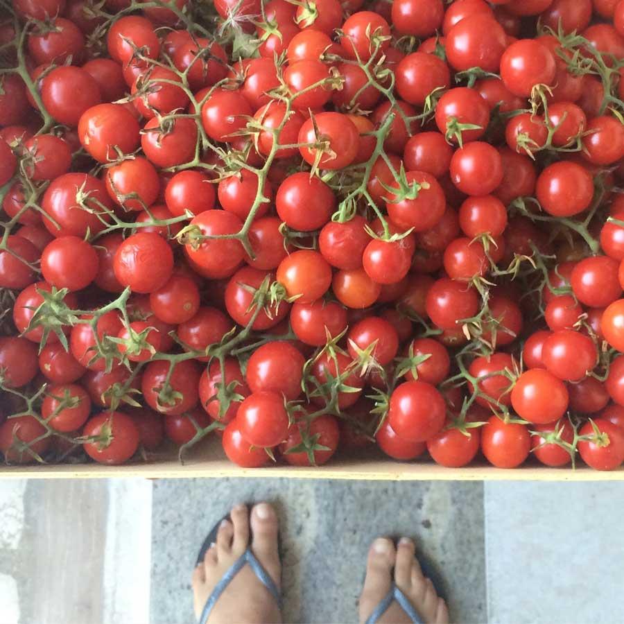 puglinesia_tomates_MadameCiao2017